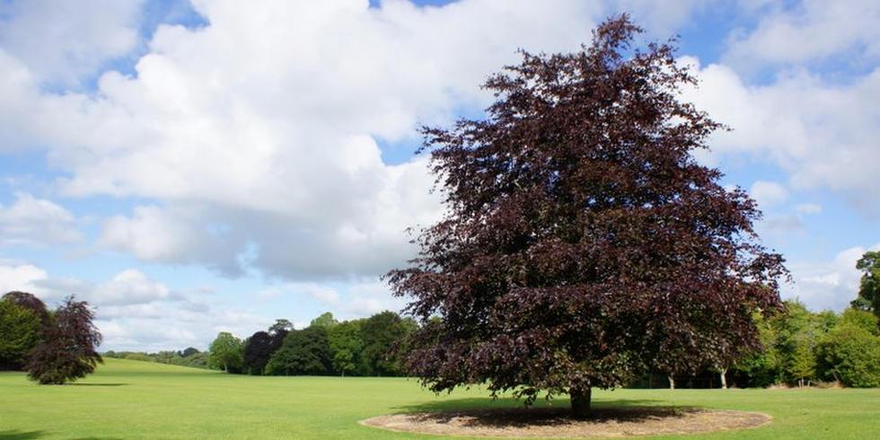Baum in Park in Irland